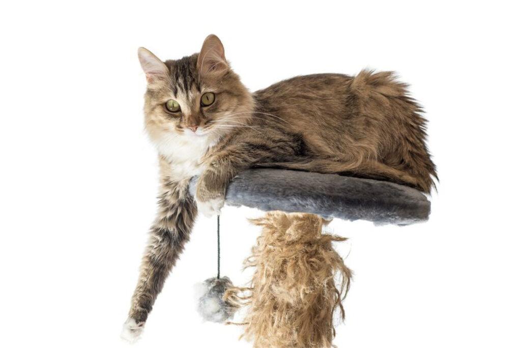 Home Care in Warren County VA: New Cat